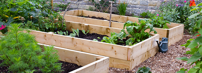 Raised vegetable gardening.