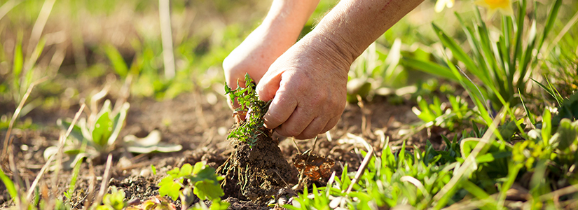 Solutions For Natural Weed Control | Natria