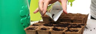 5 Reasons To Start Seeds In Spring