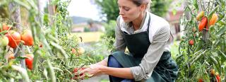5 Ways To Prevent Vegetable Diseases
