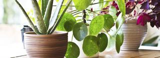 Bring Houseplants Indoors - Leave the Bugs Outdoors