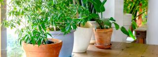 Give Houseplants a Summer Tune-up