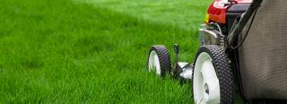 Mow Your Lawn at the Right Height