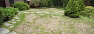 Symptoms of Summer Lawn Stress