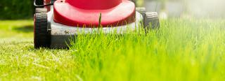 Ten Tips For Late Summer Lawn Care