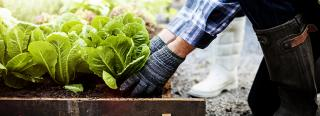 Growing Cool Season Vegetables For Fall Harvest