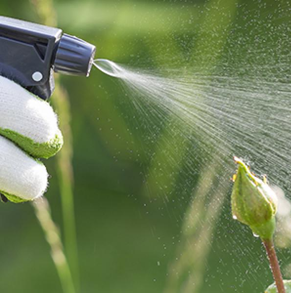 How to Kill Weeds Without Harming Plants Nearby